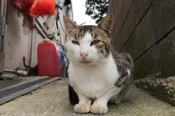 広角レンズで撮ったネコ
