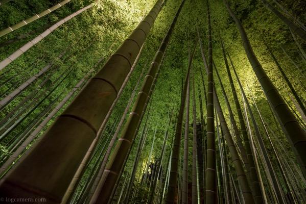 高台寺 竹林 ライトアップ