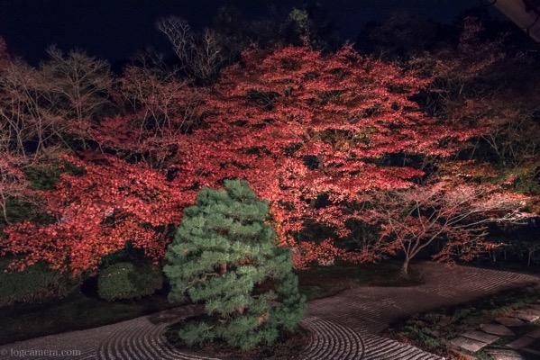 南禅寺 紅葉 ライトアップ