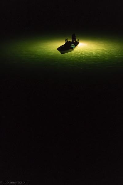 シラスウナギ漁 吉野川