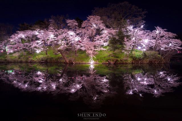 D5 お堀 桜