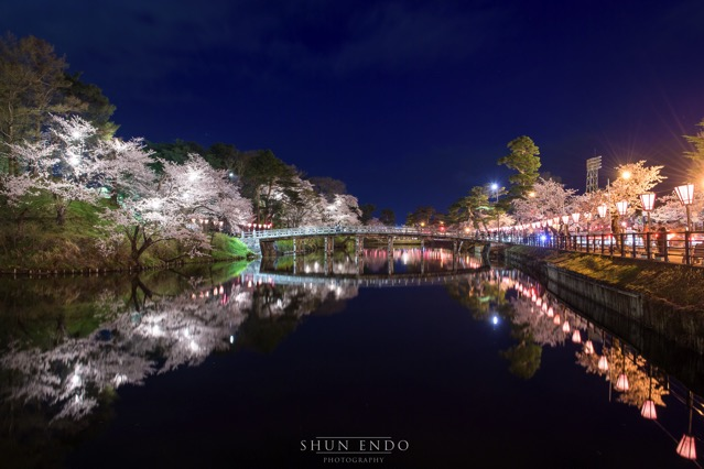 D5 高田公園 桜