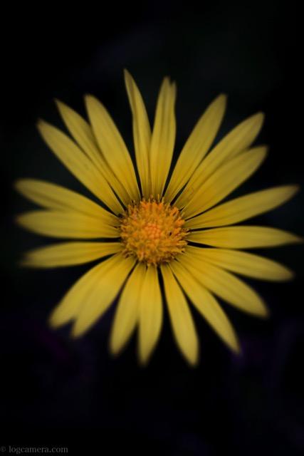 花 マクロ