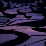 hamanoura-yoko-siruetto.jpg