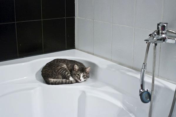 バスルームのネコ