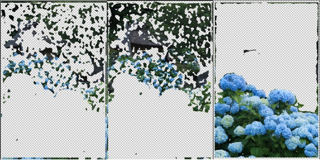 紫陽花 被写界深度合成