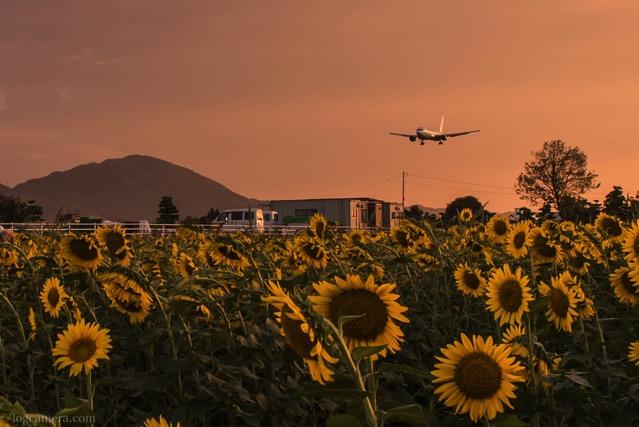 ひまわり 出雲縁結び空港 飛行機