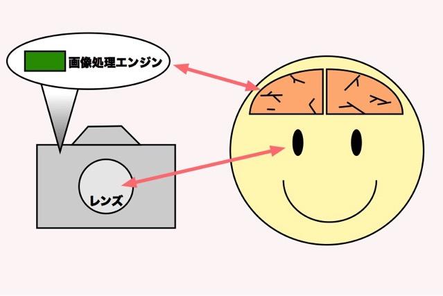 画像処理エンジンと脳