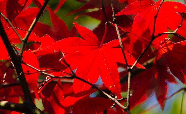 色飽和 紅葉