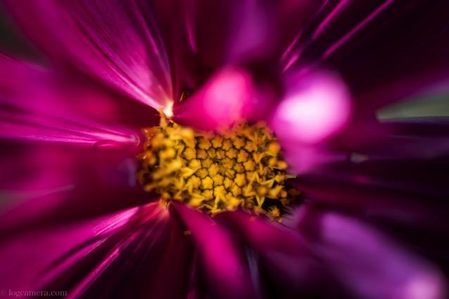 マクロ 赤い花