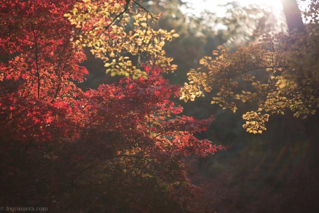 紅葉谷公園 紅葉