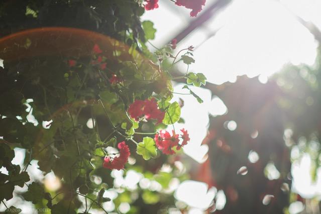 フレア 花