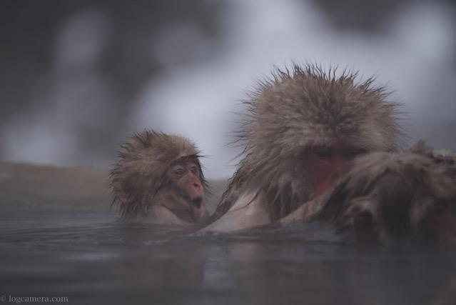 地獄谷温泉 サル