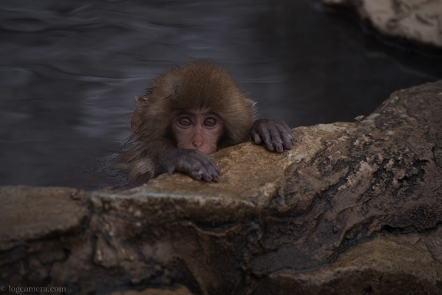 子猿 地獄谷温泉