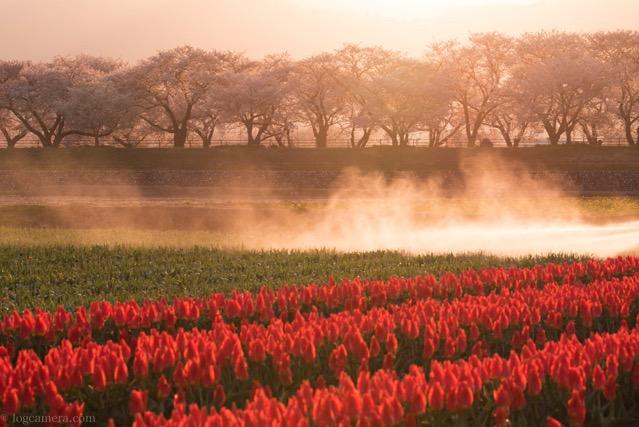 春の四重奏 霧