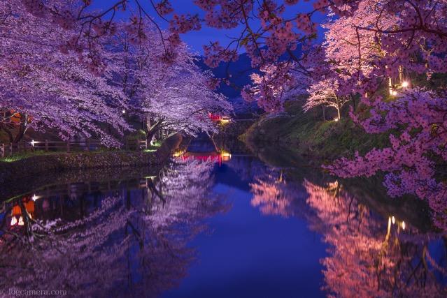 鹿野城跡 桜
