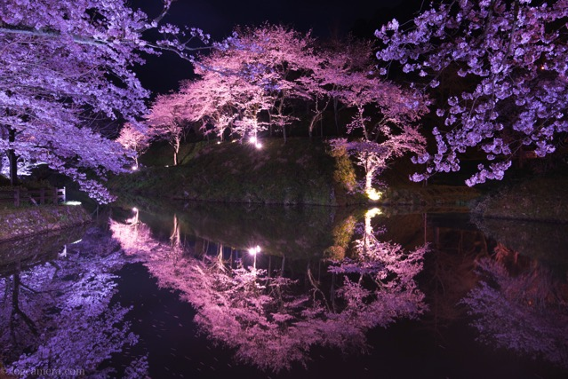 鹿野城跡 桜 リフレクション