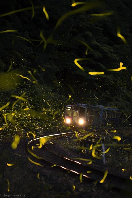 ヒメボタル 電車