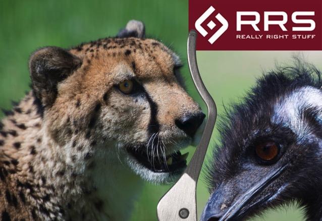 RRS イメージ画像