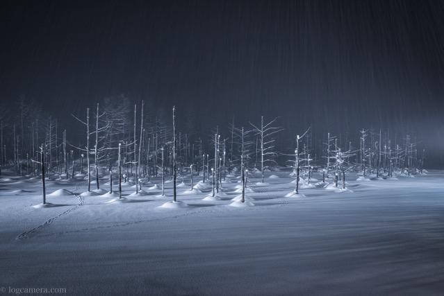 青い池 美瑛 冬 雪 ライトアップ
