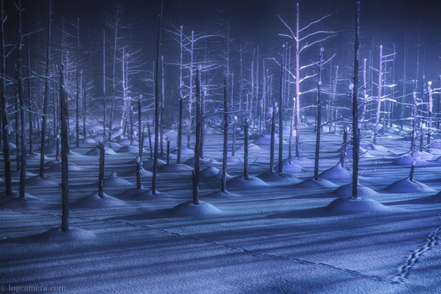 美瑛 北海道 青い池 ライトアップ 冬 雪