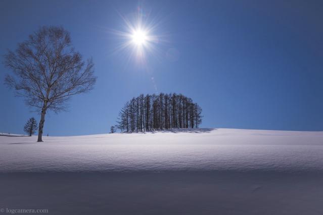 マイルドセブンの木 美瑛 雪 晴れ