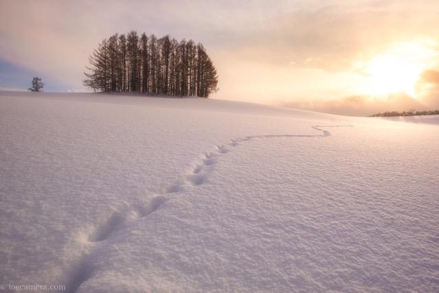 美瑛 マイルドセブンの丘 冬 雪 夕焼け
