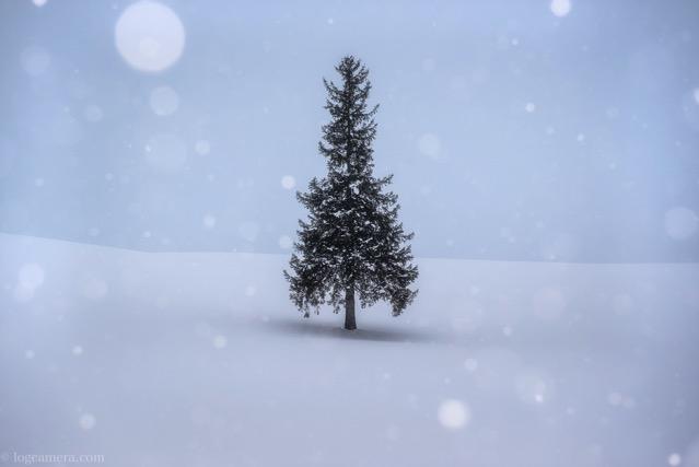 北海道 美瑛 クリスマスツリーの木 冬 雪