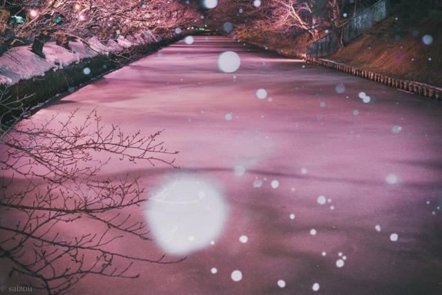 弘前公園 冬に咲くさくらライトアップ