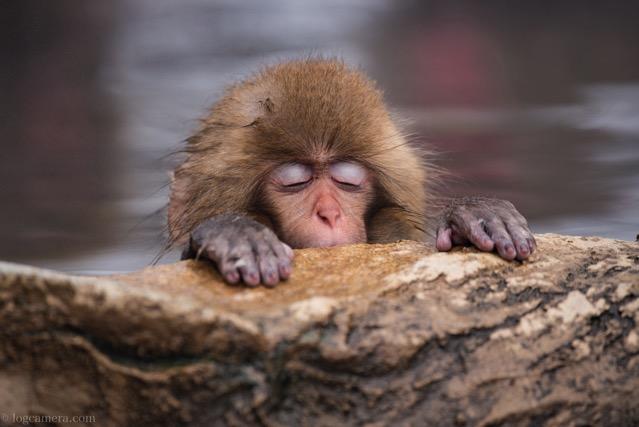 地獄谷温泉 猿