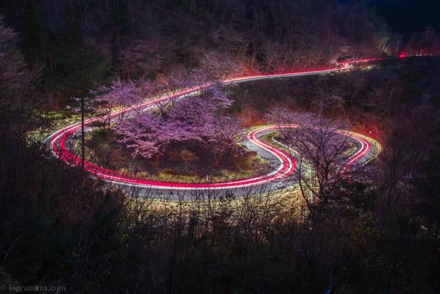 桜 光跡 テールランプ
