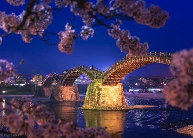 岩国 錦帯橋 桜 ライトアップ