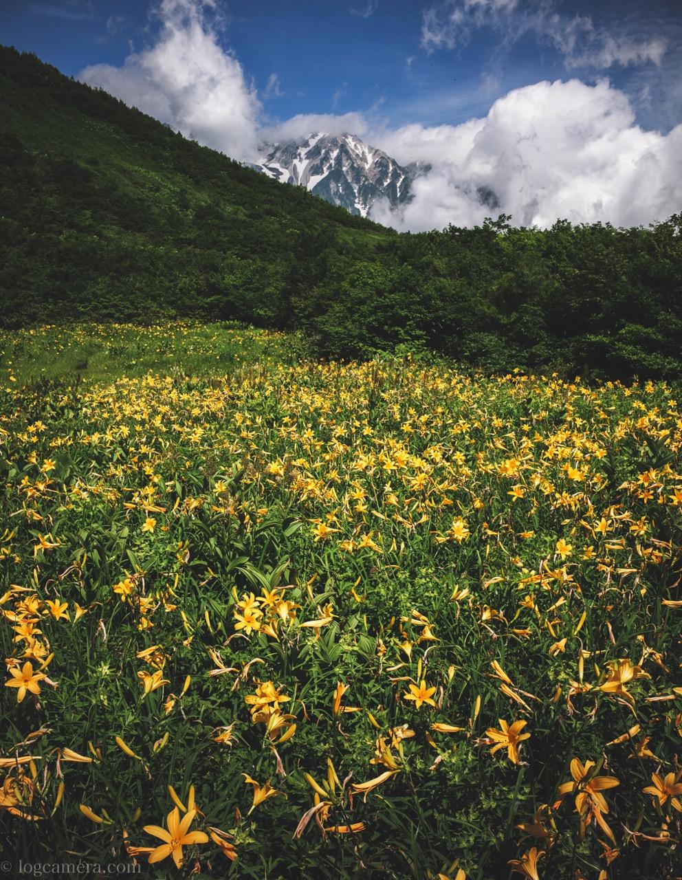 唐松岳 ニッコウキスゲ