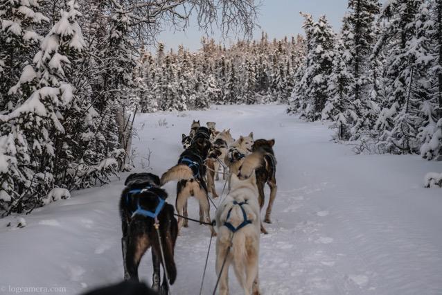 森の中をはしる犬ぞり