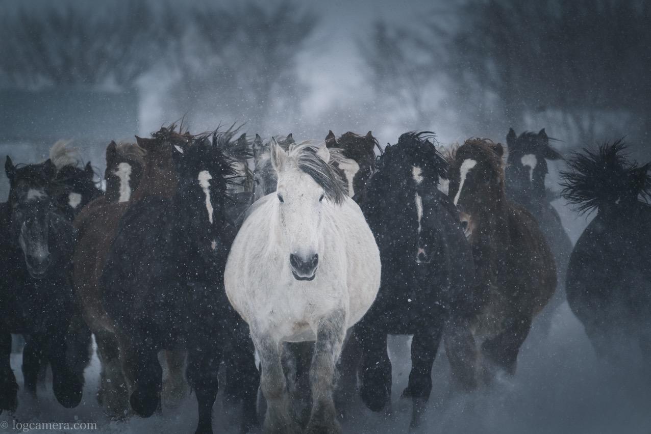 十勝牧場 馬追い運動 雪