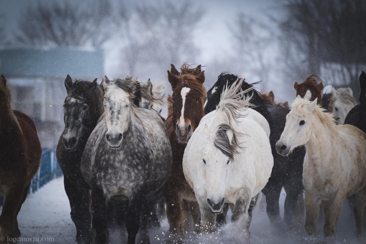 十勝牧場 馬追い運動
