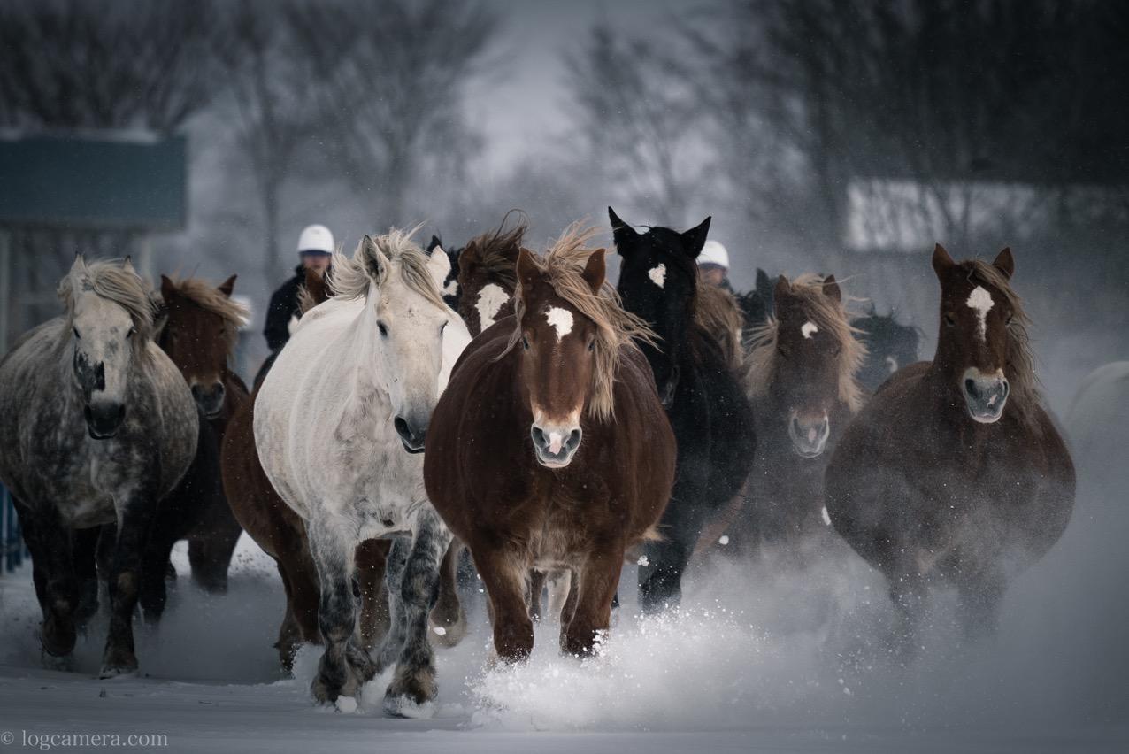 十勝牧場 馬追
