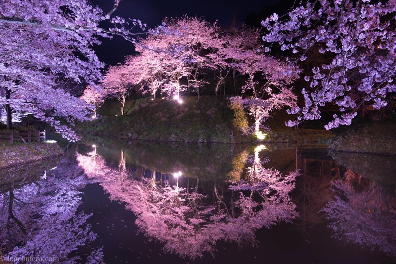 桜 リフレクション