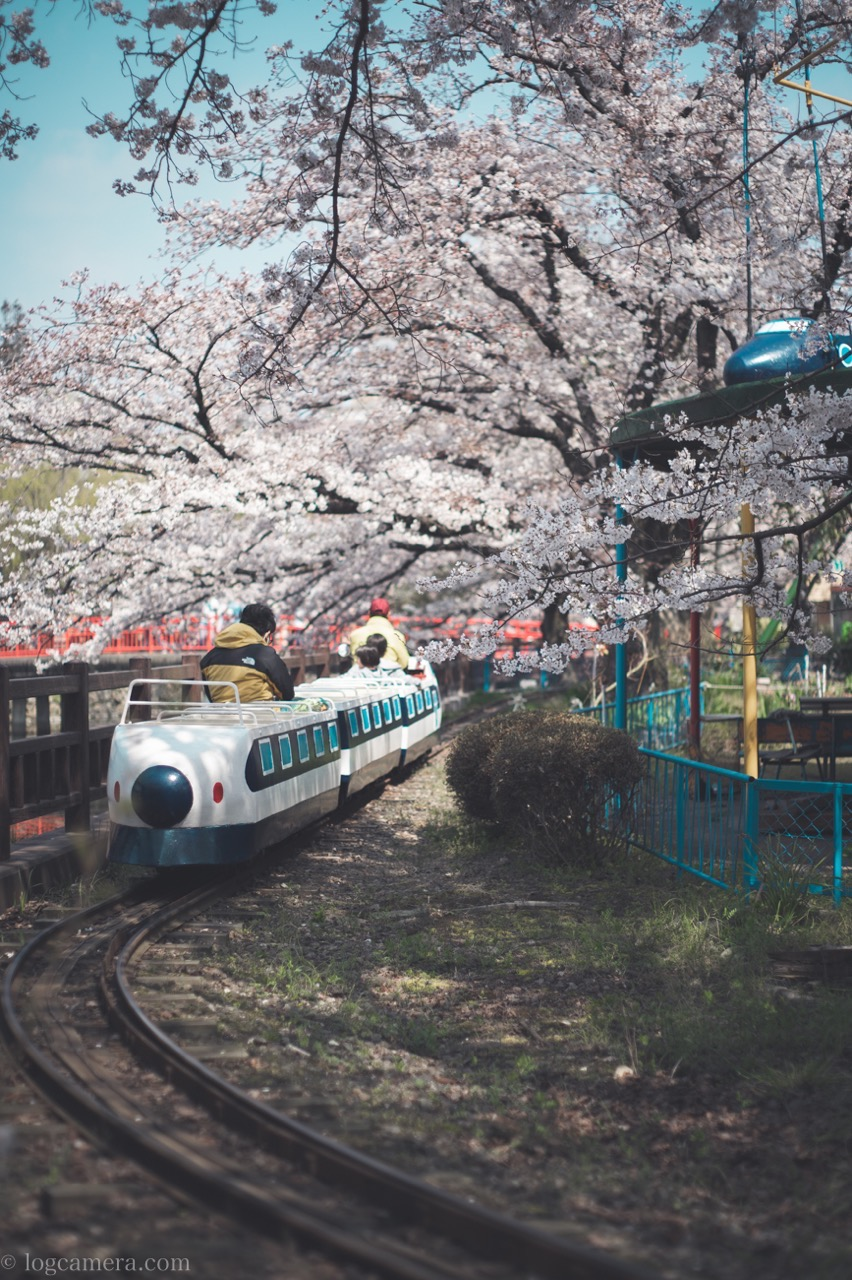 桜 遊園地