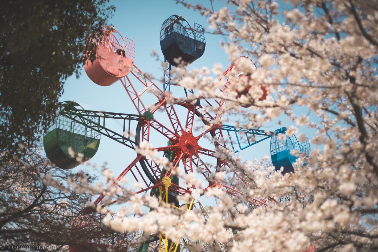 桜 観覧車