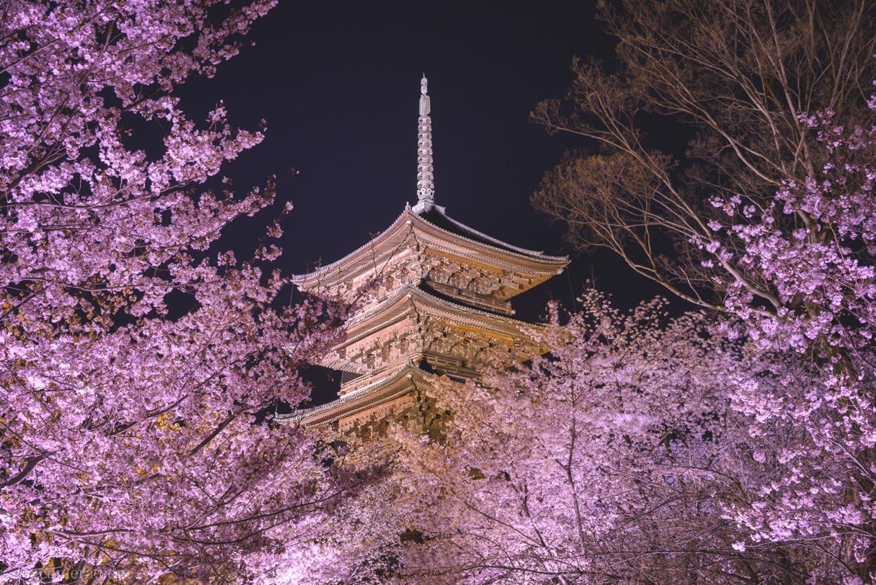 東寺 桜 ライトアップ