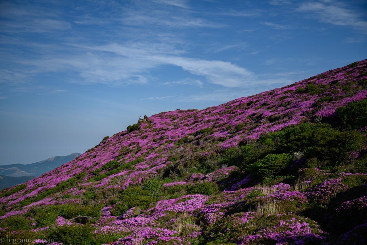 ミヤマキリシマ 平治岳
