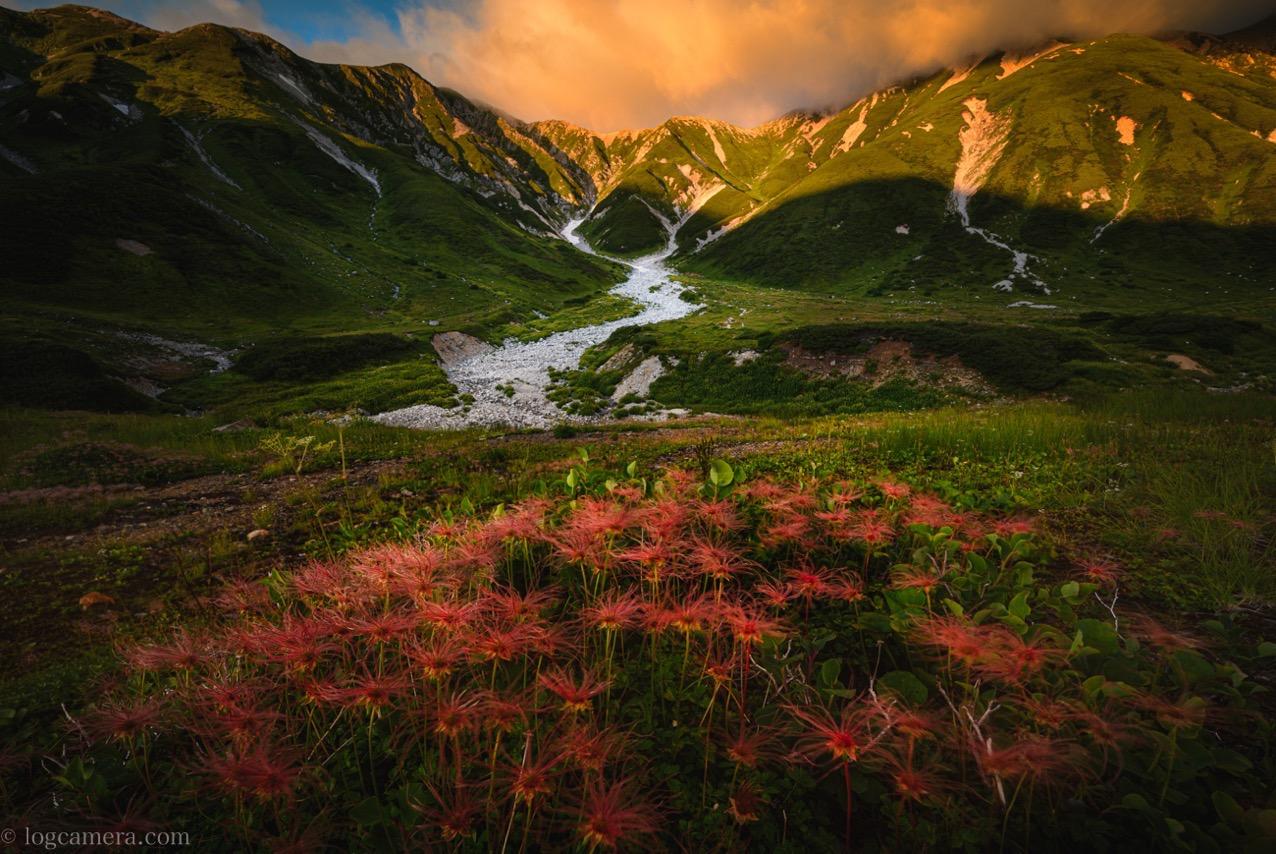 立山とチングルマ