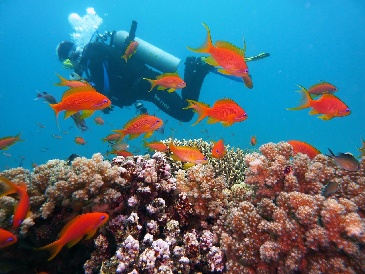 Diving 1808717 1280