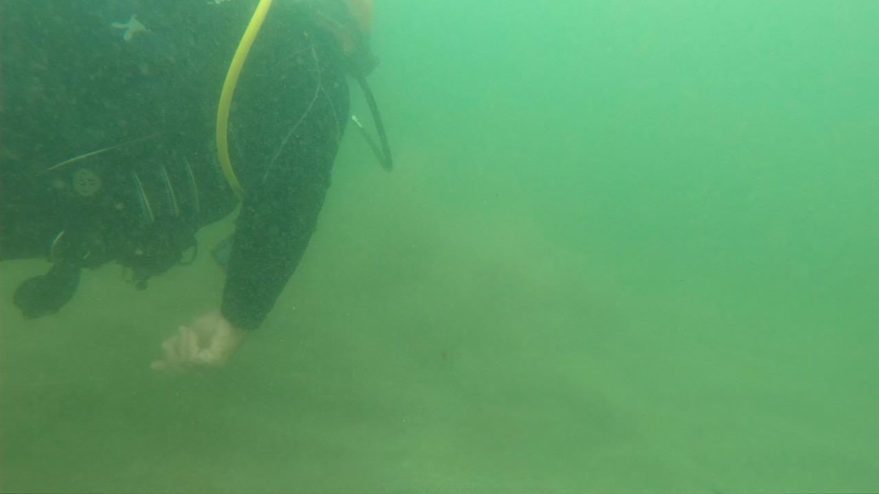 GoPro 水中での緑かぶり