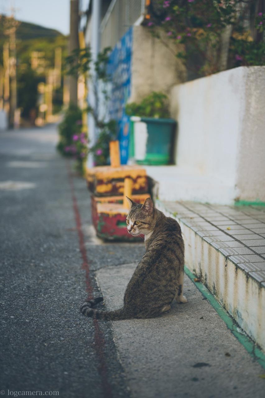 渡嘉敷島 猫