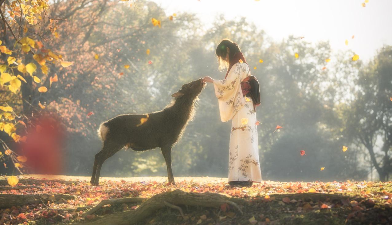 奈良 鹿 着物の女性 紅葉
