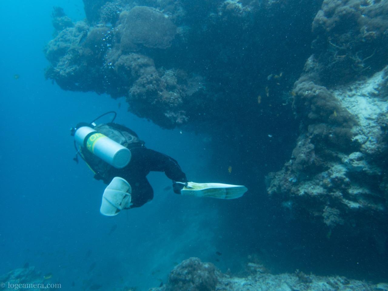 セブ島 スミロン島 ダイビング