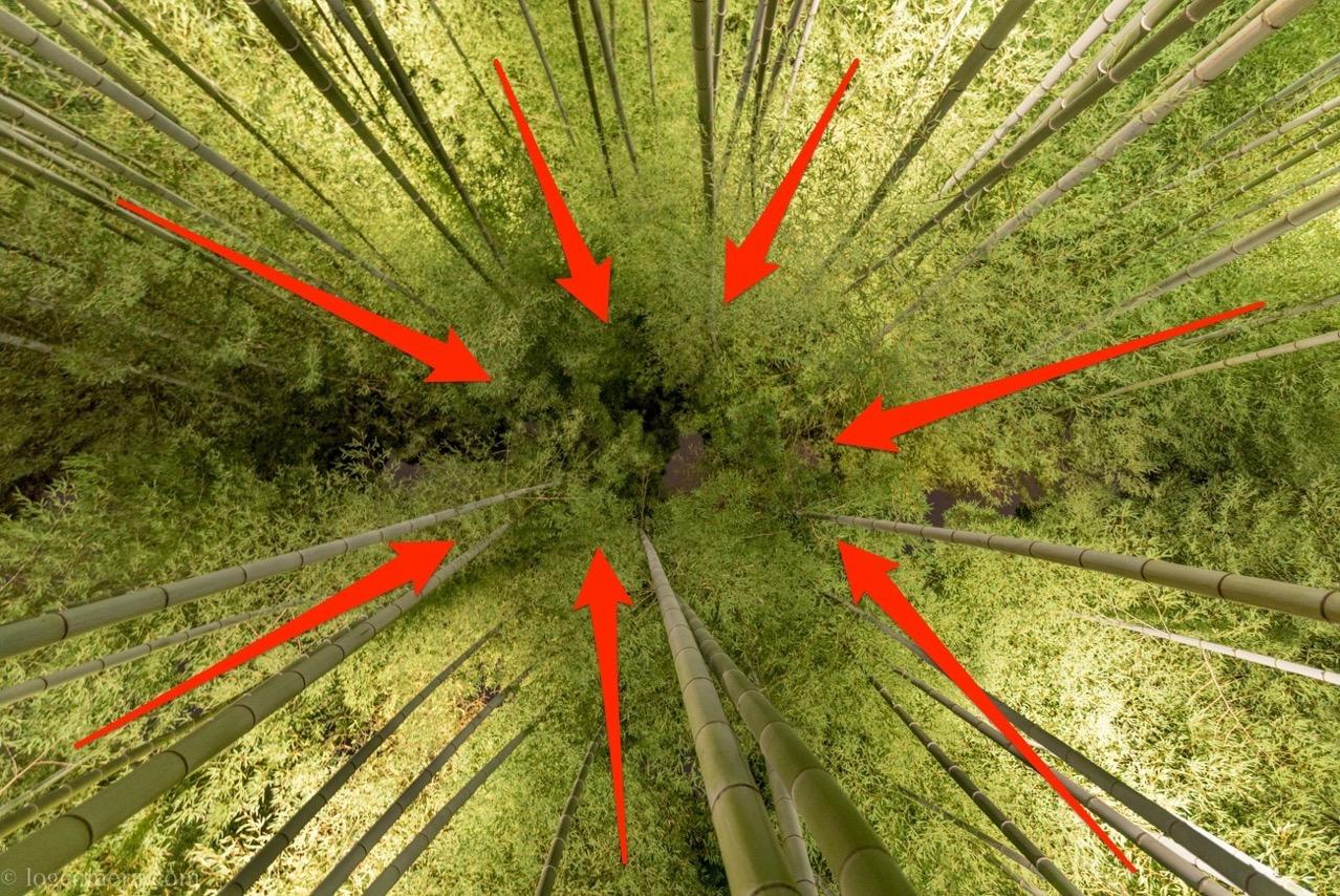 竹林 パースペクティブ