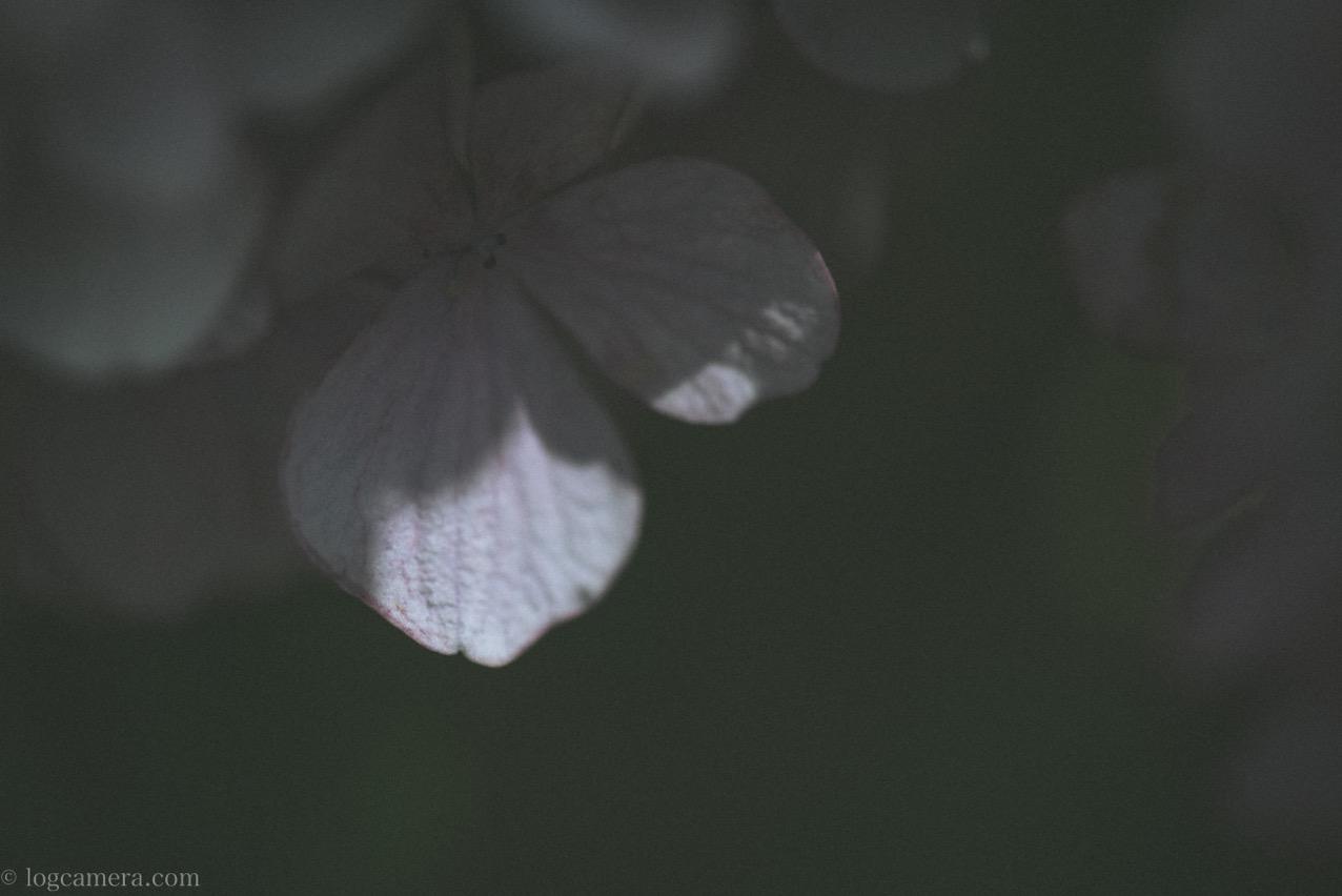 あじさいの花びら